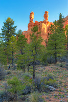 Sentinels, Red Canyon, Dixie National Forest, Utah