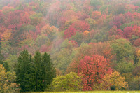 Autumn Trees and Mist, Canaan Valley, West Virginia