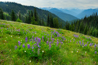Olympic Meadow, Wolf Creek Trail, Olympic National Park, Washington