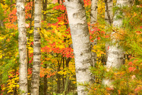 Fall Color, Halfmoon Lake, Hiawatha National Forest, Michigan
