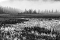 Rampart Ponds Black & White, Banff National Park, Alberta