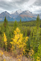 Bow Range View, Icefields Parkway, Banff National Park, Alberta