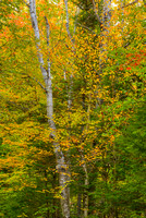 Fall Color, Evans Notch, White Mountain National Forest, Maine