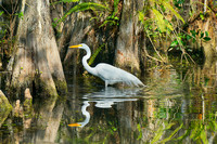 Big Cypress National Preserve, Florida Wildlife