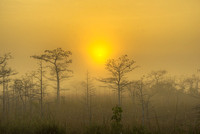 Foggy Sunrise, Everglades National Park, Florida
