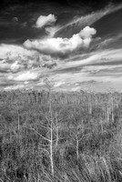 Pa-hay-okee Afternoon Black & White, Everglades National Park, Florida