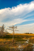 Pa-hay-okee Afternoon, Everglades National Park, Florida