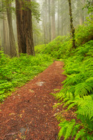 Coastal Trail, Del Norte Coast Redwoods State Park, California
