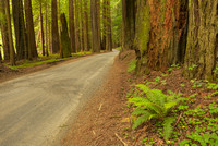 Bull Creek Road, Humboldt Redwoods State Park, California