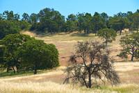 Western Sierra Foothills and Central Valley, California