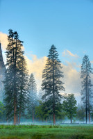Trees in Mist at Sunrise, El Capitan Meadow, Yosemite National Park, California