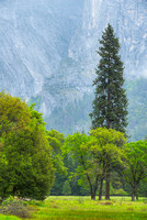 Misty El Capitan Meadow, Yosemite National Park, California