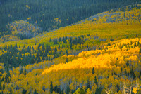Aspen Sunlight, County Road 5, Uncompahgre National Forest, Colorado