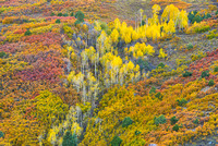 Mountainside Color, County Road 7, Uncompahgre National Forest, Colorado