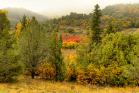 Foggy Morning, County Road 7, Uncompahgre National Forest, Colorado