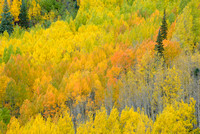 Aspen Intimate, Crystal Lake, Uncompahgre National Forest, Colorado