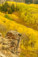 Aspen Backdrop, Dark Canyon Loop Trail, Kebler Pass, Gunnison National Forest, Colorado