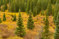 Kebler Pass Meadow, Gunnison National Forest, Colorado