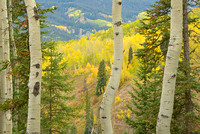 Aspen View, Kebler Pass, Gunnison National Forest, Colorado