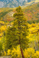 West Kebler Pass, Gunnison National Forest, Colorado