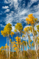 Aspen Sky, Kebler Pass, Gunnison National Forest, Colorado
