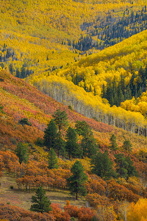 Last Dollar Road Color, Uncompahgre National Forest, Colorado