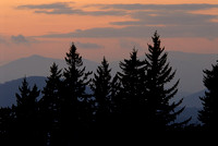 Trees at Sunset, Wooly Back Overlook, Blue Ridge Parkway, North Carolina