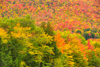 Fall Color, Crawford Notch, White Mountain National Forest, New Hampshire