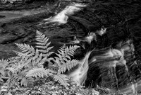 Ferns & Cascades Black & White, Old Man's Cave Area, Hocking Hills State Park, Ohio