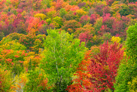 Fall Color, Orleans County, Vermont