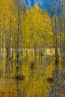 Aspen Reflections, Preacher's Point, David Thompson Country, Alberta