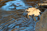 Leaf and Ripples, Matthiessen State Park, Illinois