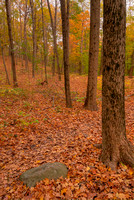 Autumn Woods, Ft. Harrison State Park, Indiana
