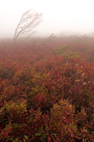 Bear Rocks Fog, Bear Rocks Preserve, Dolly Sods Wilderness, Monongahela National Forest, West Virginia