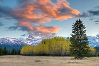 Kootenay Plains Aspen Groves, David Thompson Country, Alberta