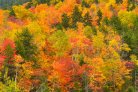 Fall Color, Arethusa Falls Trail, Crawford Notch State Park, New Hampshire