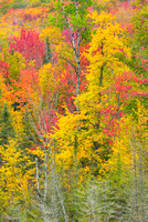 Autumn Color at Wheeler Pond, Willoughby State Forest, Vermont