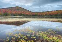 Wheeler Pond Morning, Willoughby State Forest, Vermont