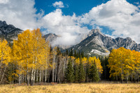 Hillsdale Meadows, Bow Valley Parkway, Banff National Park, Alberta