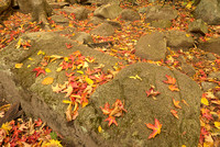Fallen Leaves, Arethusa Falls Trail, Crawford Notch State Park, New Hampshire