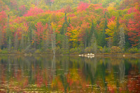 Wheeler Pond in Fog, Willoughby State Forest, Vermont