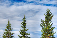 Conifer Trio, Yellowhead Highway, Jasper National Park, Alberta